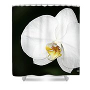 Bright White Orchid Shower Curtain