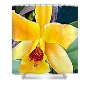 Bright Yellow And Red Cattleya Orchid Shower Curtain