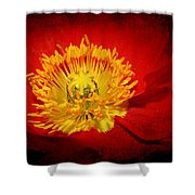 Bright Yellow Poppy Center Shower Curtain