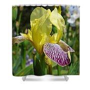 Bright Yellow Purple Iris Flower Irises Shower Curtain