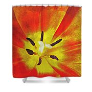 Brighter Days Shower Curtain