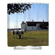 Brighton Barn And Horses Shower Curtain