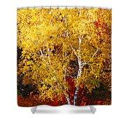 Brilliance Of Autumn On Rib Mountain Shower Curtain
