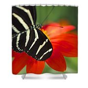 Brilliance Of Color 2047 2 Shower Curtain
