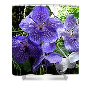 Brilliant Checkerboard Purple Orchid Shower Curtain