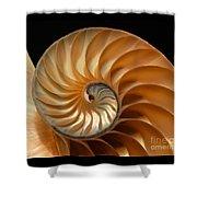 Brilliant Nautilus Shower Curtain