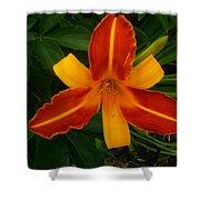 Brilliant Orange Lily Shower Curtain