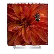 Brilliant Red Dahlia Shower Curtain