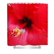 Brilliant Red Hibiscus Shower Curtain
