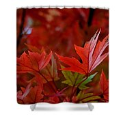 Brilliant Red Maples Shower Curtain