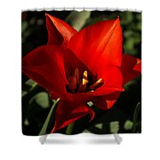 Brilliant Spring Sunshine In Red  Shower Curtain