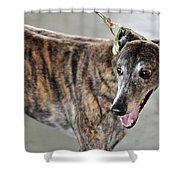 Brindle Greyhound Dog Usa Shower Curtain