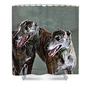 Brindle Greyhound Dogs Usa Shower Curtain