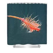 Brine Shrimp Shower Curtain