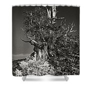 Bristlecone And Wildflowers In Black And White Shower Curtain