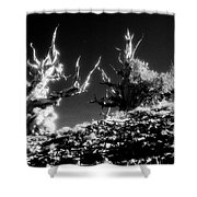 Bristlecone Twins In Infrared Shower Curtain