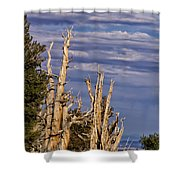 Bristlecone Warriors Shower Curtain