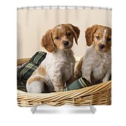 Brittany Dog Puppies In Basket Shower Curtain