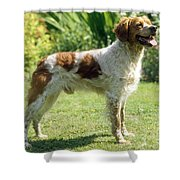 Brittany Dog, Standing Side Shower Curtain