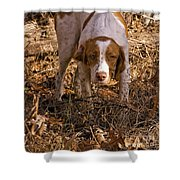 Brittany Spaniel Pixel's Pointed Woodcock Shower Curtain