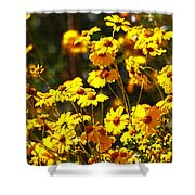 Brittle Bush In Bloom  Shower Curtain