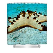 Brittle Star Fish Shower Curtain