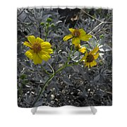 Brittlebush Flowers Shower Curtain