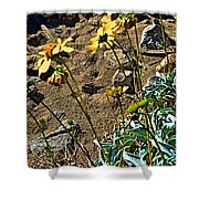 Brittlebush On Borrego Palm Canyon Trail In Anza-borrego Desert Sp-ca Shower Curtain