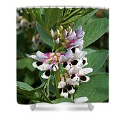 Broad Beans Shower Curtain