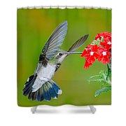 Broad-billed Hummingbird Shower Curtain