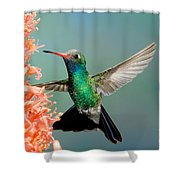 Broad-billed Hummingbird At Ocotillo Shower Curtain