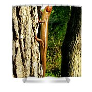 Broad Headed Skink Shower Curtain