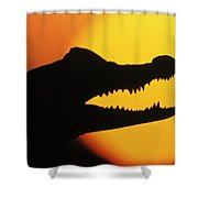 Broad-snouted Caiman  Shower Curtain