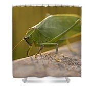 Broad-winged Katydid Shower Curtain