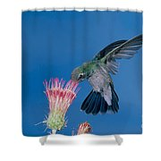 Broadbill Hummingbird Feeding At Flower Shower Curtain