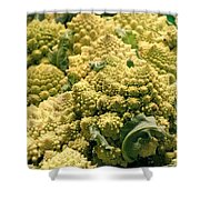 Broccoflower Shower Curtain