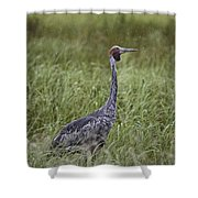 Brolga  Shower Curtain