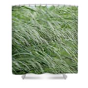 Brome Grass In The Hay Field Shower Curtain