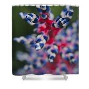 Bromeliad - Aechmia Dichlamydea - Guzmania Lingulata Shower Curtain