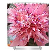 Bromeliad Close Up Pink Shower Curtain