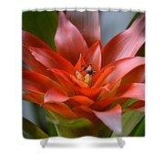 Bromeliad I Shower Curtain