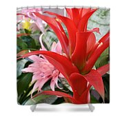Bromeliad Red Pink Brick Shower Curtain