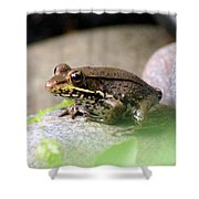 Bronze Frog Shower Curtain