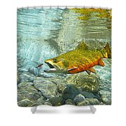 Brook Trout And Artificial Fly Shower Curtain
