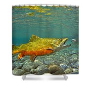 Brook Trout And Coachman Wet Fly Shower Curtain