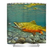 Brook Trout And Royal Coachman Shower Curtain