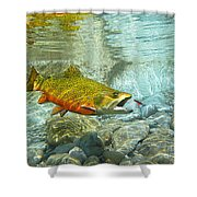 Brook Trout And Silver Doctor Shower Curtain