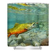 Brookie With Wet Fly Shower Curtain