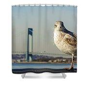 Brooklyn Seagull Shower Curtain