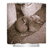 Brothers In Arms Shower Curtain
